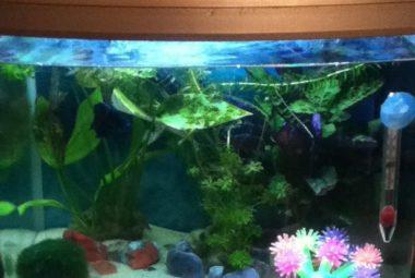 Betta Aquarium With Plants Set-up