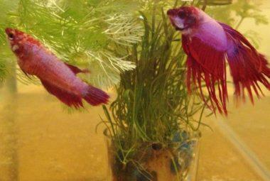 Breeding Tank - Robin And Ariel