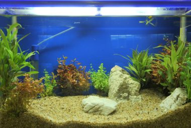 The Best Lighting For Your Betta Aquarium