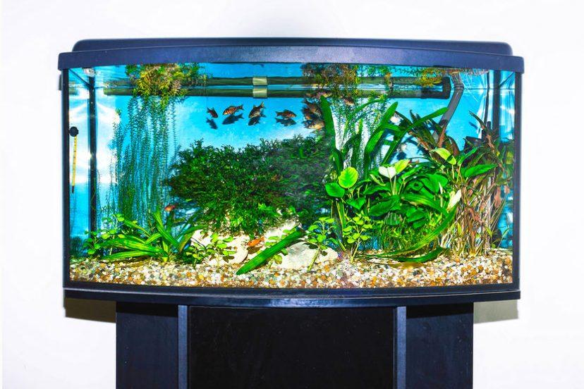 Betta Fish Tank Setup – Part 2