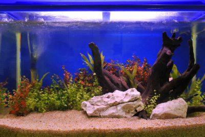 Betta Fish Tank Setup - Part 3