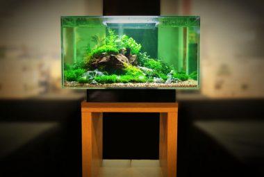 Betta Fish Tank Setup - Introduction