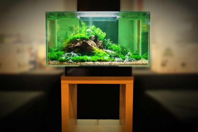 Betta Fish Tank Setup – Introduction – Start Here!