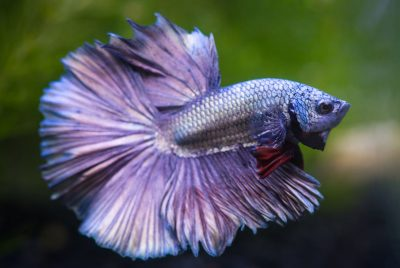 Tips For Maintaining Your Betta's Health