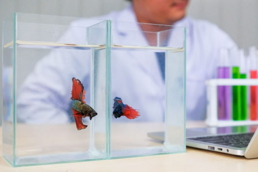 3 Betta Fish Diseases You Need To Know