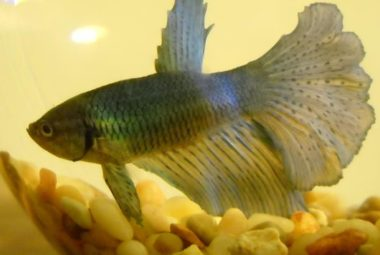Betta's Name: Lavernius Tucker