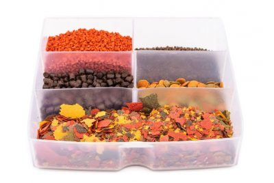 Basic Betta Nutrition