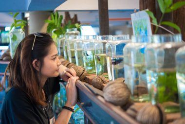 Before You Bring Your New Betta Home - Read This!