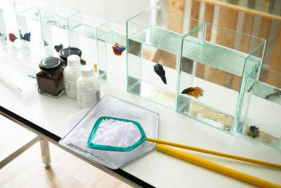 Common Betta Fish Tank Maintenance Supplies