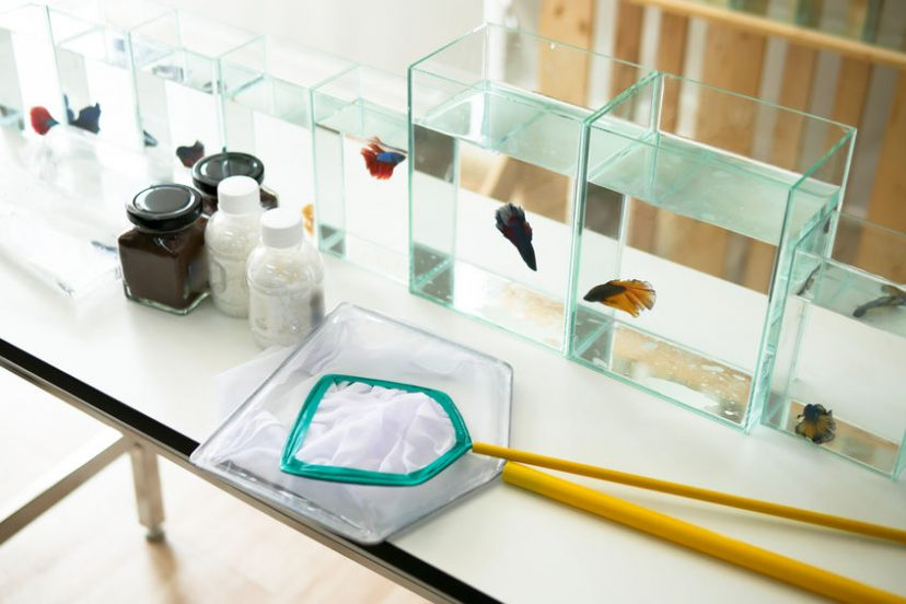 Common Betta Fish Tank Maintenance Supplies