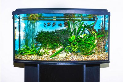 Betta Fish Tank Setup - Part 2