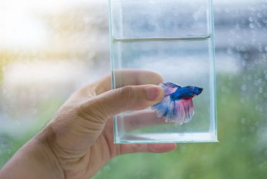 Helpful Tips On Choosing The Best Betta To Bring Home